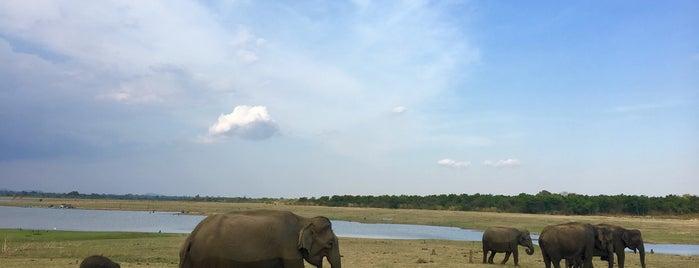 Udawalawa National Park is one of Tempat yang Disukai Antonella.