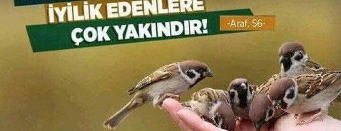 Hacı İlbey Camii is one of Tek.