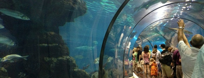 Aquàrium de Barcelona is one of #myhints4Barcelona.