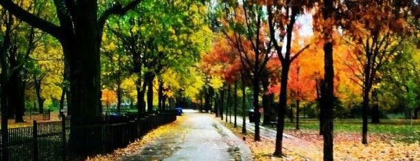 Trinity Bellwoods Park is one of Toronto.