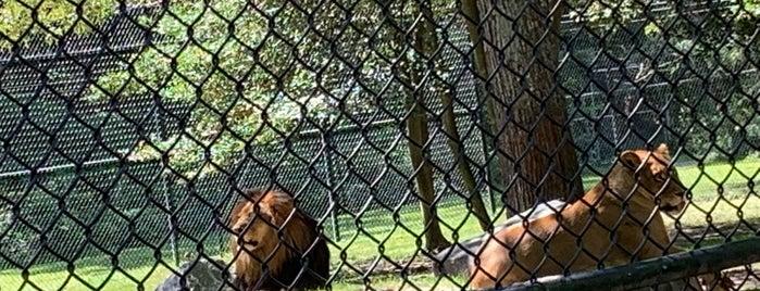 Cape May County Park & Zoo is one of Orte, die Nicholas gefallen.