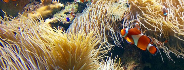 Vancouver Aquarium is one of Vancouver Wish List.