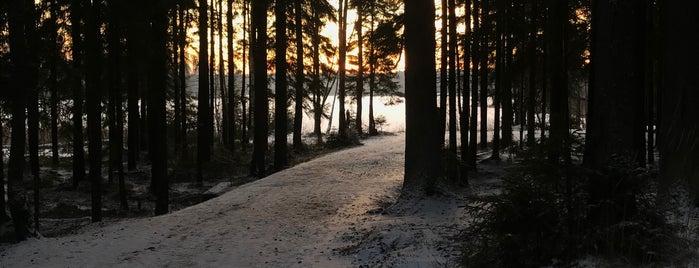 Заказник «Озеро Щучье» is one of Сестрорецк и побережье Финского залива.