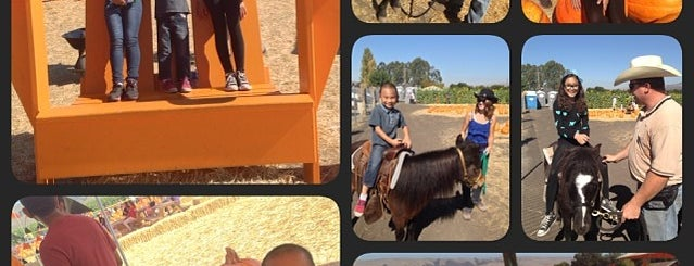 Spina Farms Pumpkin Patch is one of SF Bay Area - been there I.
