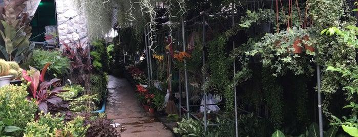 Siam Orchid Center is one of Around Bangkok | ตะลอนทัวร์รอบกรุงฯ.