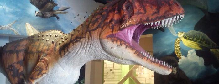 Museo de Historia Natural Ecatepec is one of Museos.