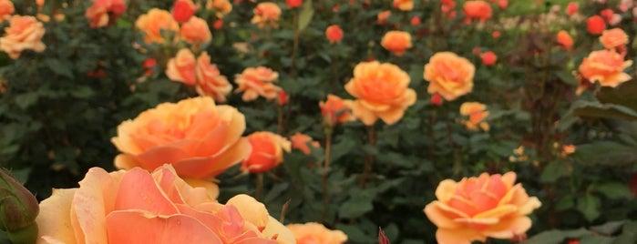 Norfolk Botanical Garden is one of Wmsbg / Norfolk / Va Beach.