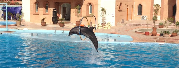 Dolphina is one of Sharm Elsheikh.