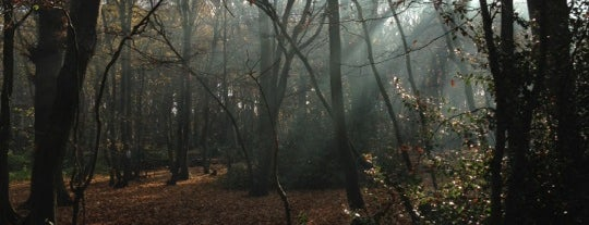 Coldfall Wood is one of Ancient woodland in London.