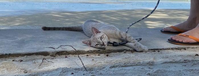 Beachpool @ Centara Chaan Talay Resort is one of schon gemacht 2.