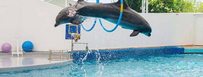 Antalya Aksu Dolphinarium is one of Турция.