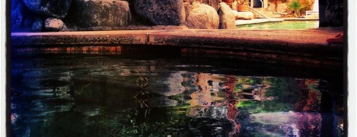 SAHARA desert hot springs is one of Tempat yang Disukai Desiree.