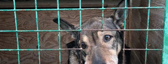Кожуховский приют для бездомных животных is one of Annaさんのお気に入りスポット.