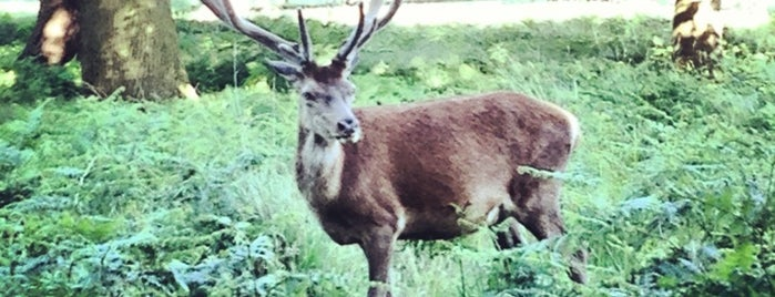 Richmond Park is one of ing.