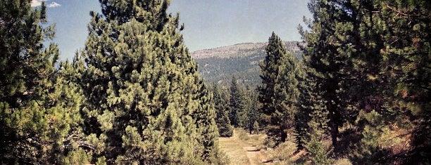 North Tahoe Regional Park is one of Orte, die Douglas gefallen.