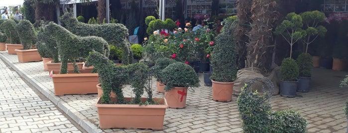 süs bitkileri ve fidancılık sergisi is one of Lugares favoritos de Özgül.