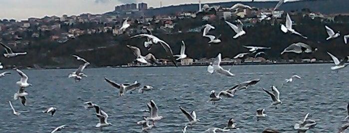 Yeniköy Spor Kulübü Tesisleri is one of Tempat yang Disukai Nihan.