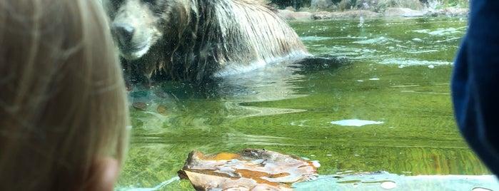 Hearst Grizzly Gulch is one of Orte, die Ingrid gefallen.