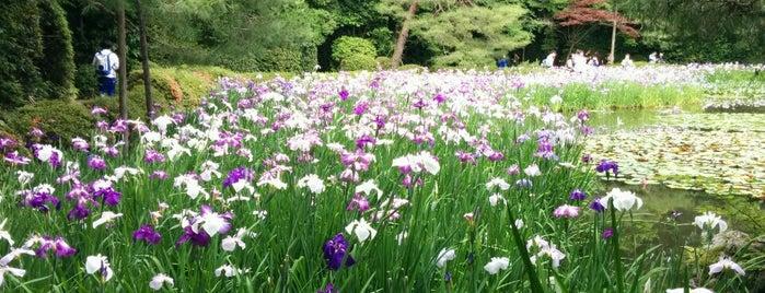 平安神宮神苑 is one of Kyoto Gardens.