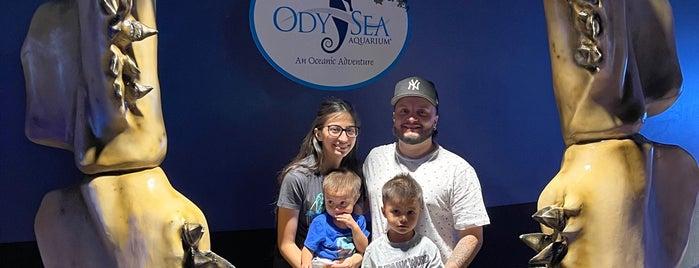 OdySea Aquarium is one of PHX.