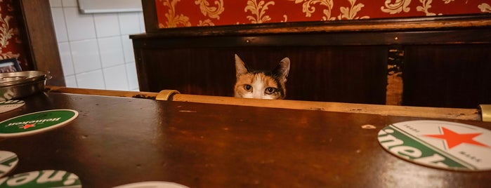 Café de Gaeper is one of Amsterdam bars with a cat.
