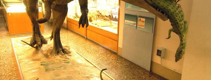 Museo di Storia Naturale, Sezione di Geologia e Paleontologia is one of FIRENZE E LA SCIENZA.