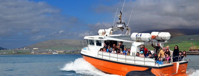 Dingle Dolphin Tours is one of In Dublin's Fair City (& Beyond).