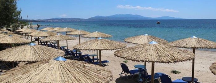 Sunny Bay Beach Bar is one of Chalkidiki.