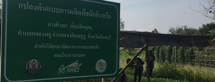 สวนป้าเบส|เกษตรอินทรีย์ is one of Tempat yang Disukai Kanokporn.