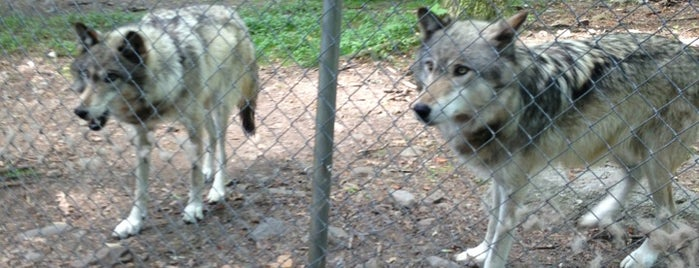 Camp Taylor & Lakota Wolf Preserve is one of New Jersey with kids.