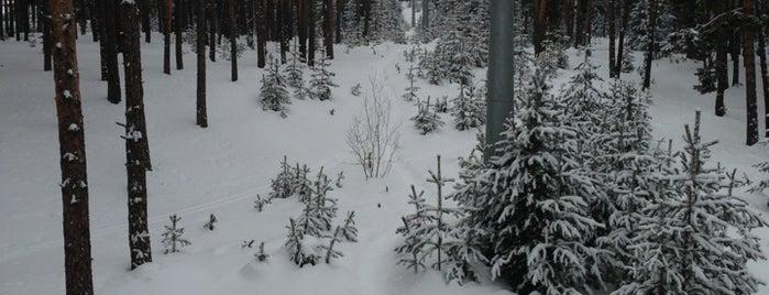 Sarıkamış Kayak Merkezi is one of Ayse'nin Beğendiği Mekanlar.