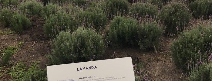 Lavandário is one of Tatiさんのお気に入りスポット.
