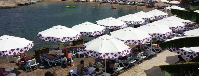 Shayna Beach Club is one of Orte, die Na¢кσ gefallen.