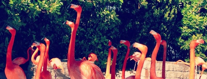 Flamingos is one of Locais salvos de Priscila.