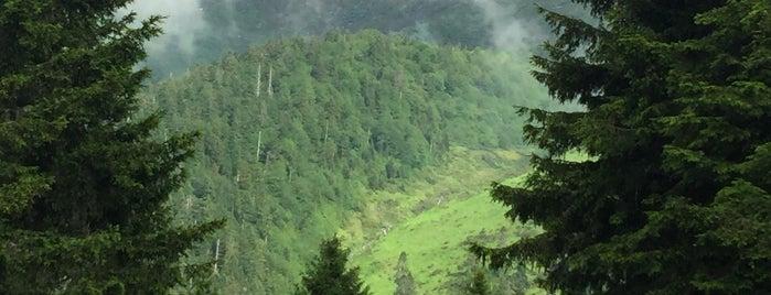 Hazindak Yaylası is one of Mountain Resorts In Black Sea Region.