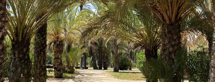 Palmeral De Elche is one of Spain + Islands.