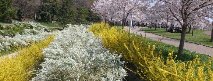 山田池公園 is one of JPN.