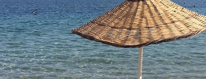 Daphnis Beach is one of Burcuさんのお気に入りスポット.
