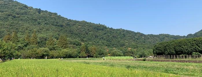 八卦田 is one of Lieux qui ont plu à Jingyuan.
