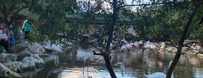 Flamingo Köy is one of Istanbul Cocuk.