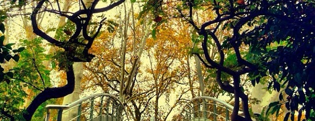 Parc de Bercy is one of Les parcs et jardins accessibles aux chiens.