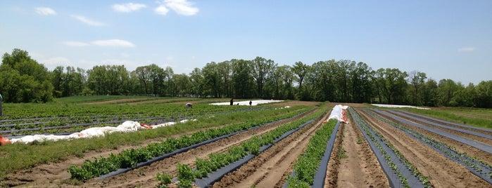Honey Brook Organic Farm is one of Locais curtidos por Spe.