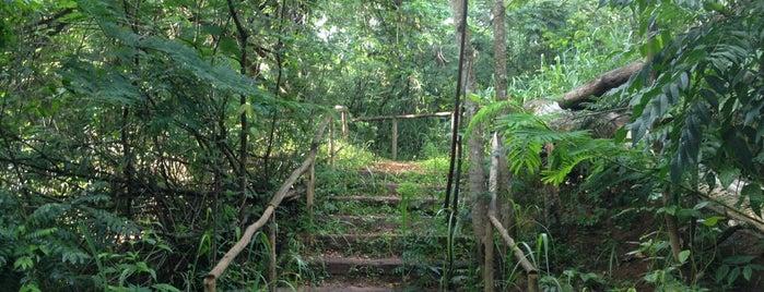 Parque do Areão is one of beta ;-;.