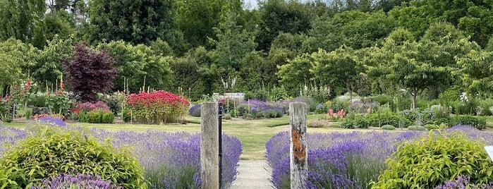Wanaka Lavender Farm is one of NZ.