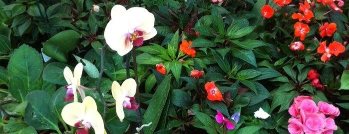 Gulistan Botanik is one of Tempat yang Disukai Onur.