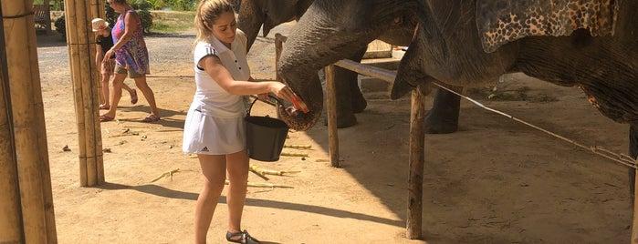 Elephant Jungle Sanctuary is one of Phuket.