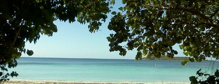 Vieques Island is one of 101 Places to Take Your Family in the U.S..