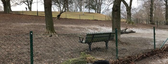 Hundrastgården i Kronobergsparken is one of Stockholm dogs.