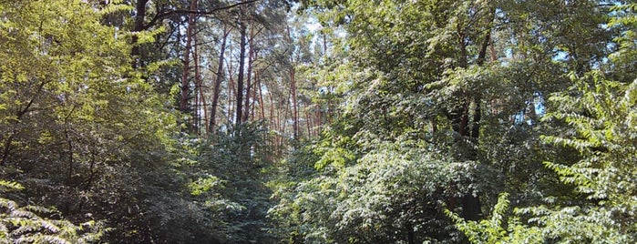 Никольський лес is one of Posti che sono piaciuti a Anna.
