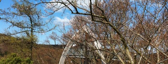Treetopwalk - Baumkronenweg Edersee is one of Hotspots Hessen | Spiel & Spaß.